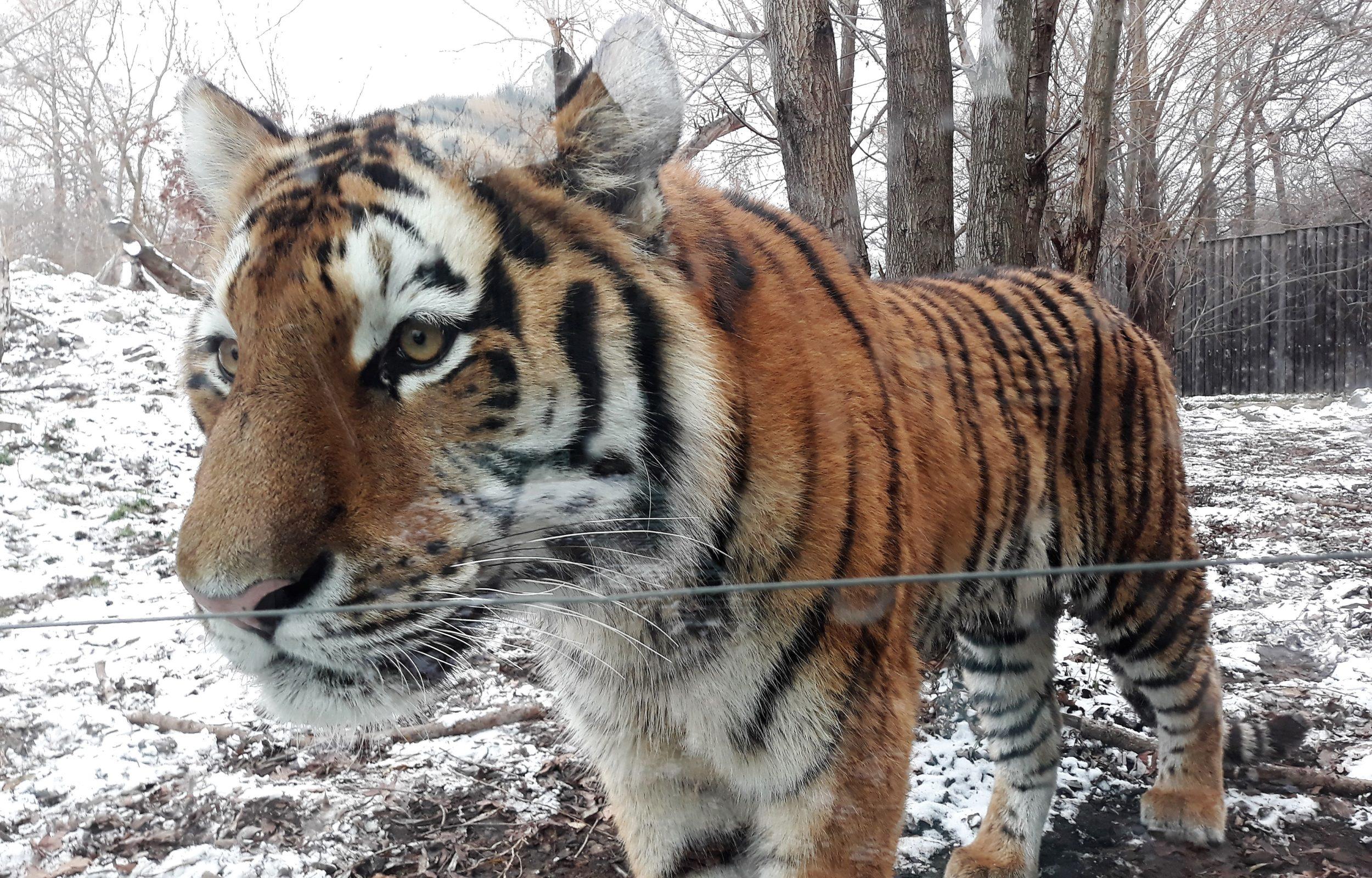 Hodonínská zoo překonala rekord. Vloni ji navštívilo téměř 200 000 lidí