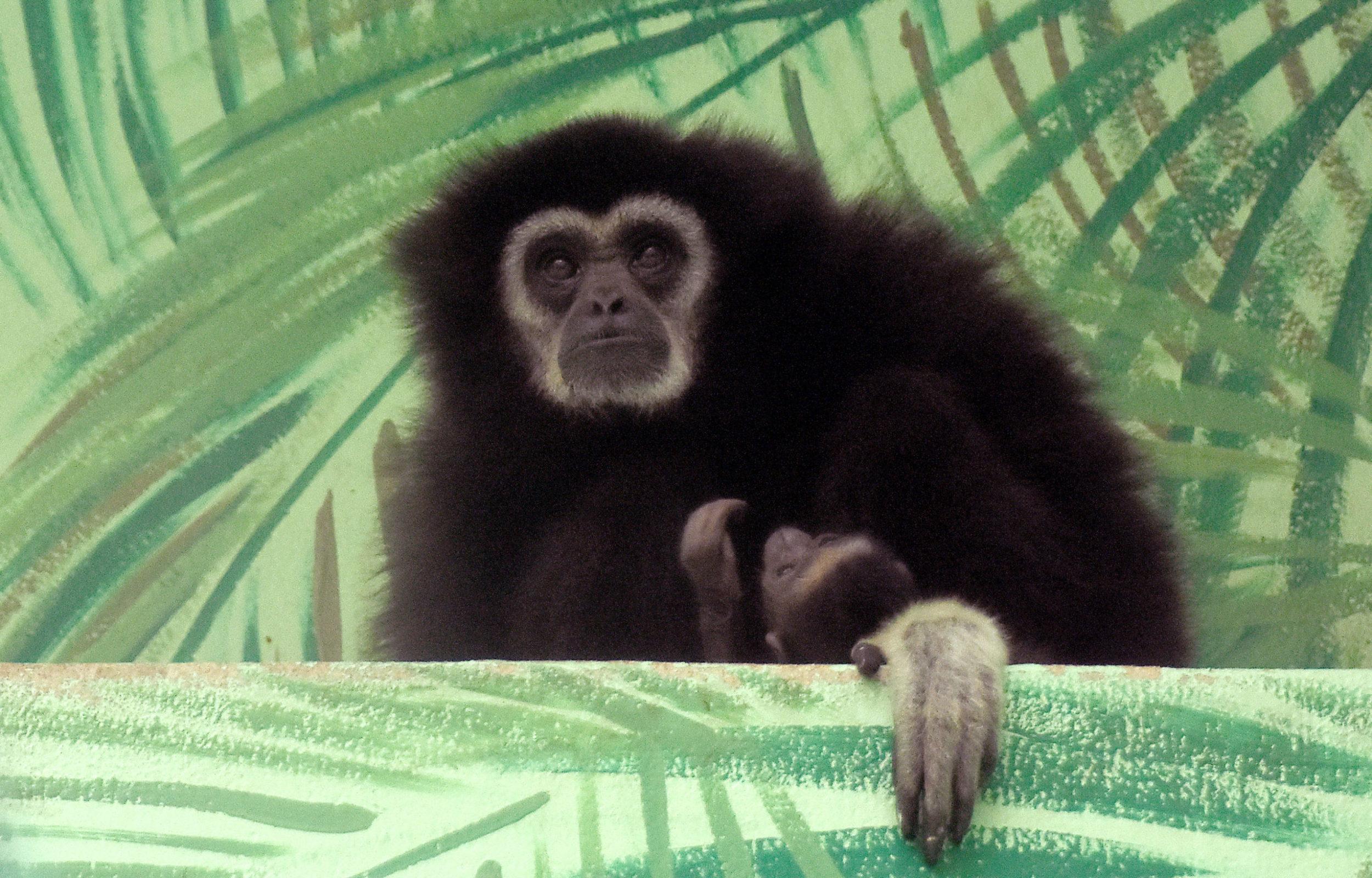 Zoo před otevřením hlásí nová mláďátka